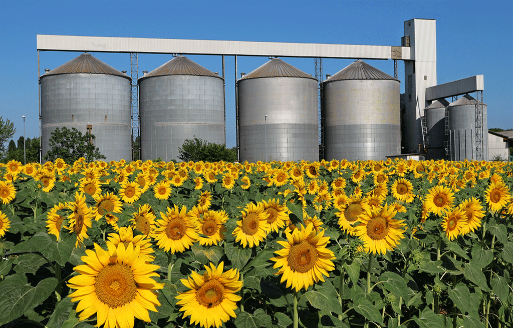 Sunflower processing – a profitable, but at the same time complex activity.